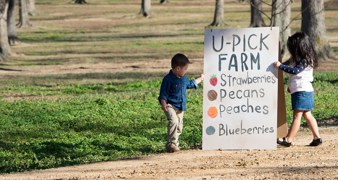 A young boy looks at a sign in a pecan orchard.